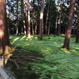 Tempel Garten Japan 1