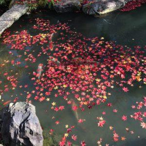 Tempel Garten Japan 7