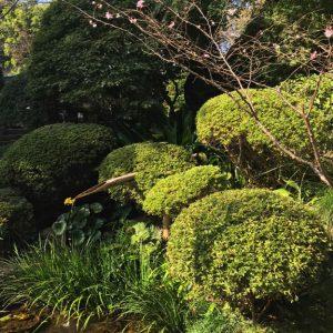 Tempel Garten Japan 11