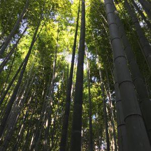 Tempel Garten Japan 14