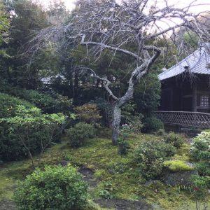 Tempel-Garten-Japan-15-1024x768_2